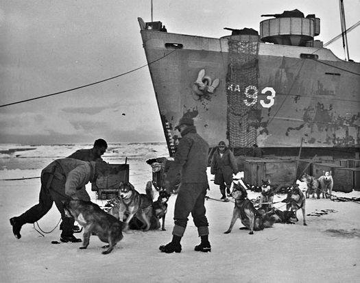 Разгрузка собак на берег Антарктиды с корабля «Янси».